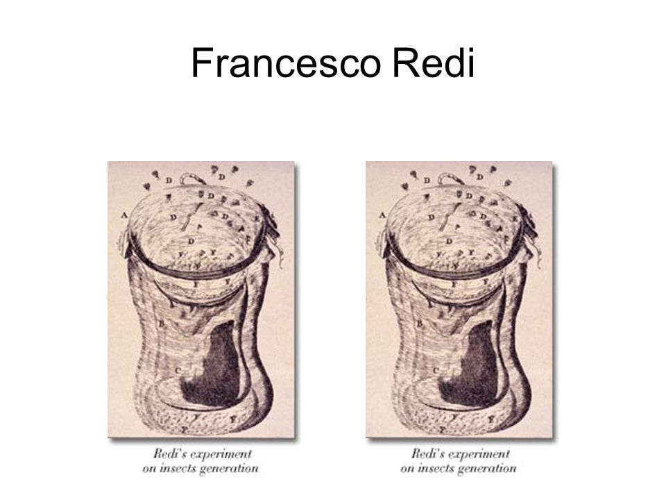 Francesco Redi