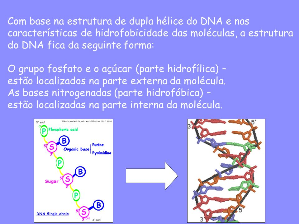 Com base na estrutura de dupla hélice do DNA e nas