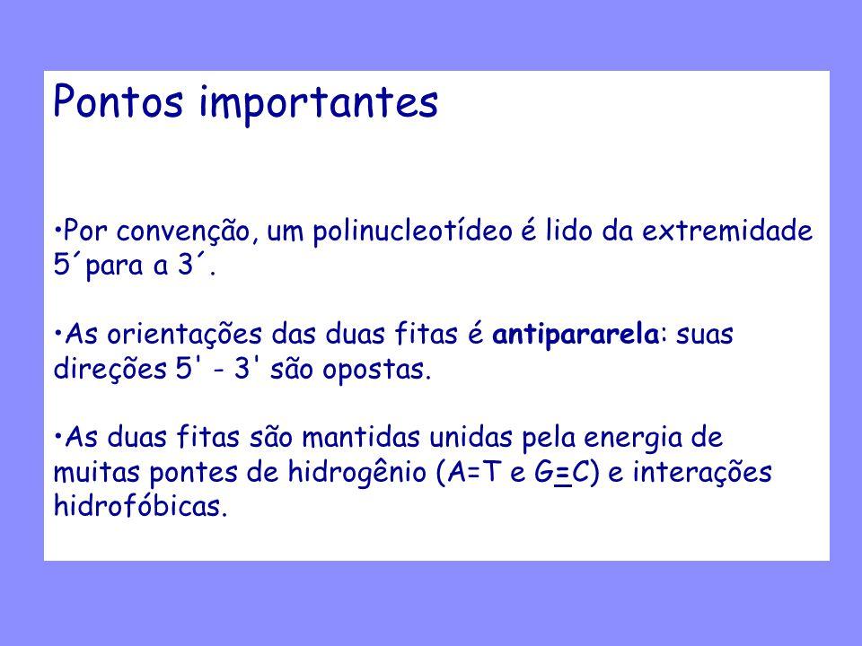 Pontos importantes Por convenção, um polinucleotídeo é lido da extremidade. 5´para a 3´. As orientações das duas fitas é antipararela: suas.