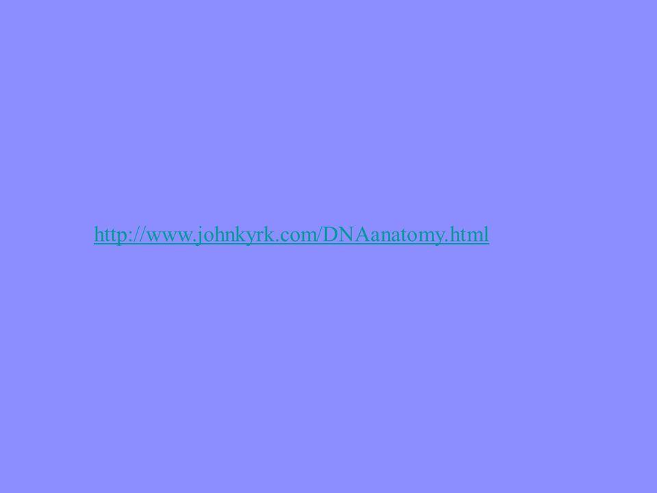http://www.johnkyrk.com/DNAanatomy.html