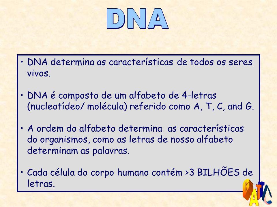 DNA G T C A DNA determina as características de todos os seres vivos.