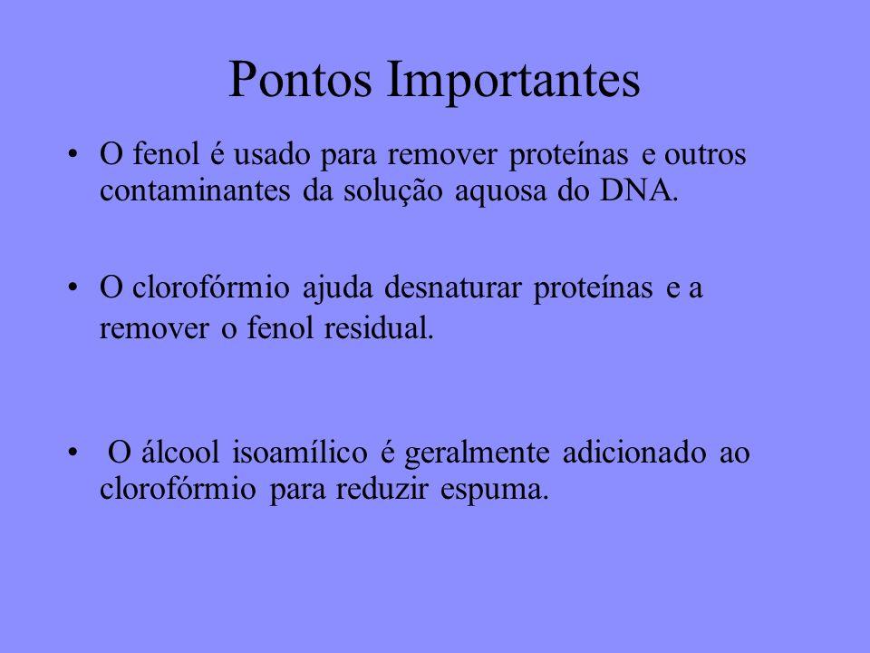 Pontos Importantes O fenol é usado para remover proteínas e outros contaminantes da solução aquosa do DNA.