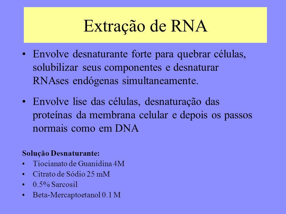 Extração de RNA Envolve desnaturante forte para quebrar células, solubilizar seus componentes e desnaturar RNAses endógenas simultaneamente.