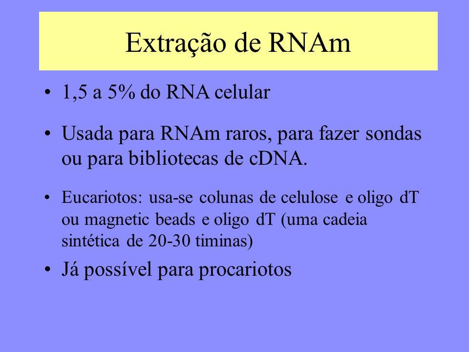 Extração de RNAm 1,5 a 5% do RNA celular
