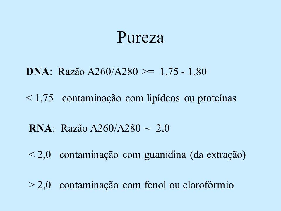 Pureza DNA: Razão A260/A280 >= 1,75 - 1,80