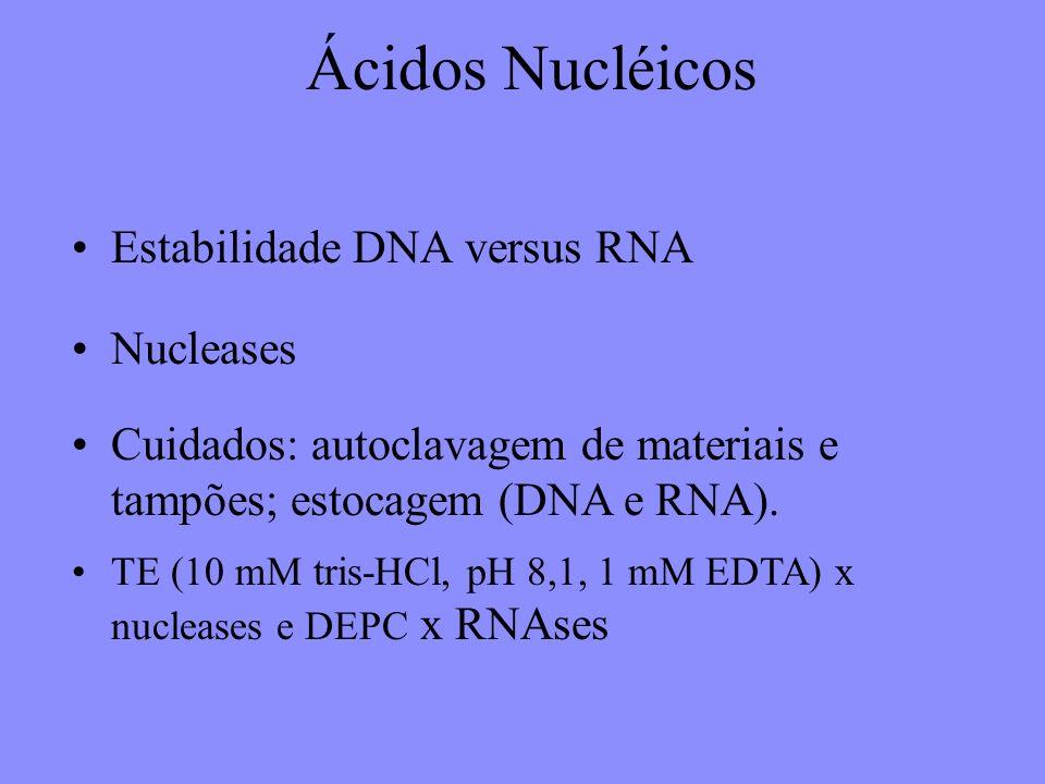 Ácidos Nucléicos Estabilidade DNA versus RNA Nucleases
