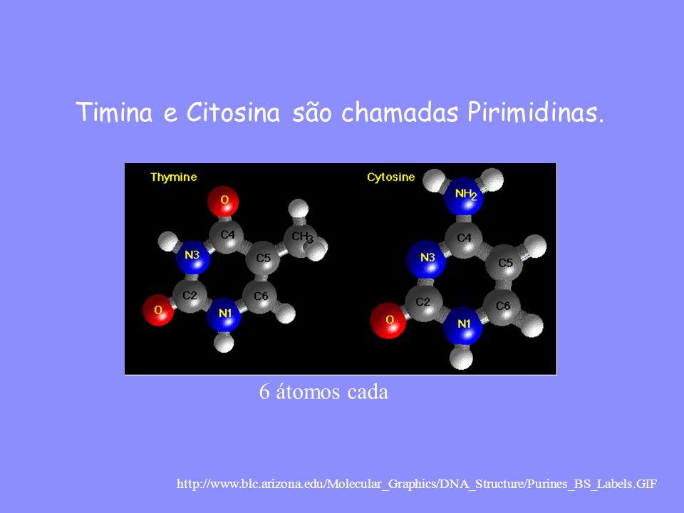 Timina e Citosina são chamadas Pirimidinas.
