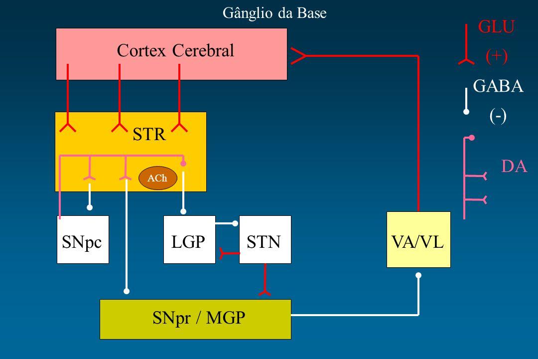 GLU (+) Cortex Cerebral GABA (-) STR DA SNpc LGP STN VA/VL SNpr / MGP