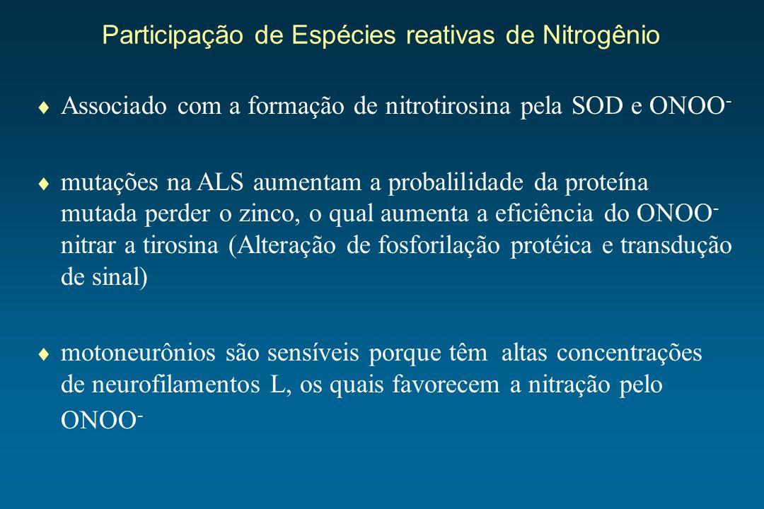 Participação de Espécies reativas de Nitrogênio