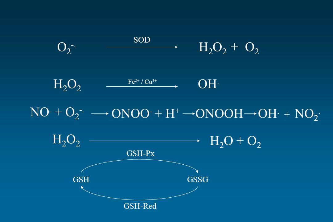 O2-. H2O2 + O2 H2O2 OH. NO. + O2-. ONOO- + H+ ONOOH OH. + NO2. H2O2