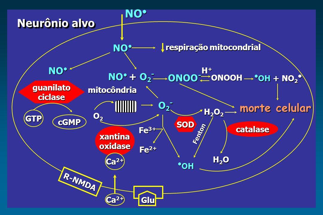 NO• Neurônio alvo morte celular NO• NO• NO• + O2- ONOO- •OH + NO2• O2-
