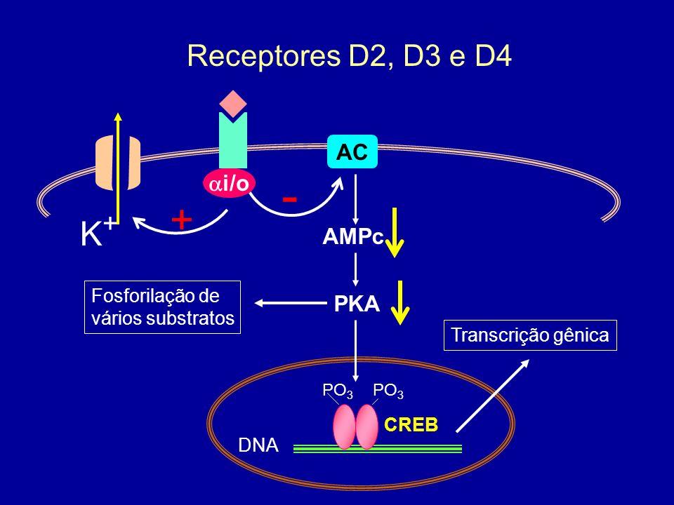 - + K+ Receptores D2, D3 e D4 AC ai/o AMPc PKA Fosforilação de