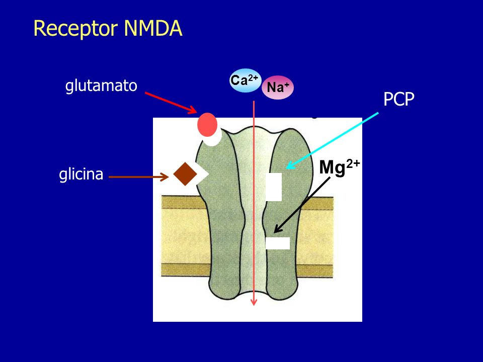 Receptor NMDA glutamato Ca2+ Na+ PCP Mg2+ glicina