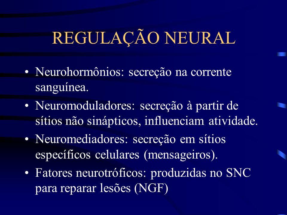 REGULAÇÃO NEURAL Neurohormônios: secreção na corrente sanguínea.