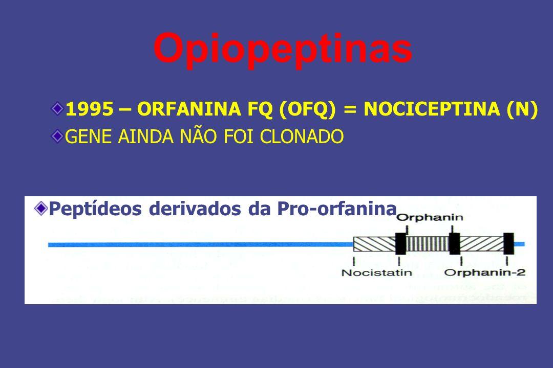 Opiopeptinas 1995 – ORFANINA FQ (OFQ) = NOCICEPTINA (N)