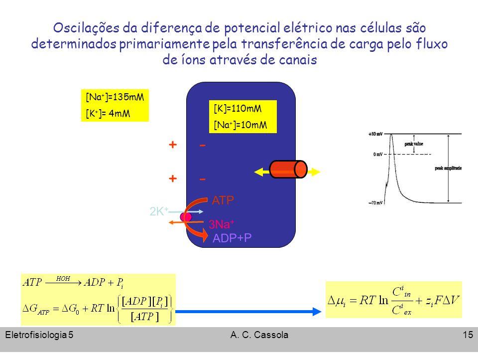 Oscilações da diferença de potencial elétrico nas células são determinados primariamente pela transferência de carga pelo fluxo de íons através de canais