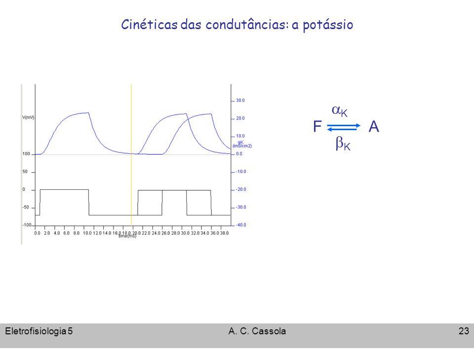 Cinéticas das condutâncias: a potássio