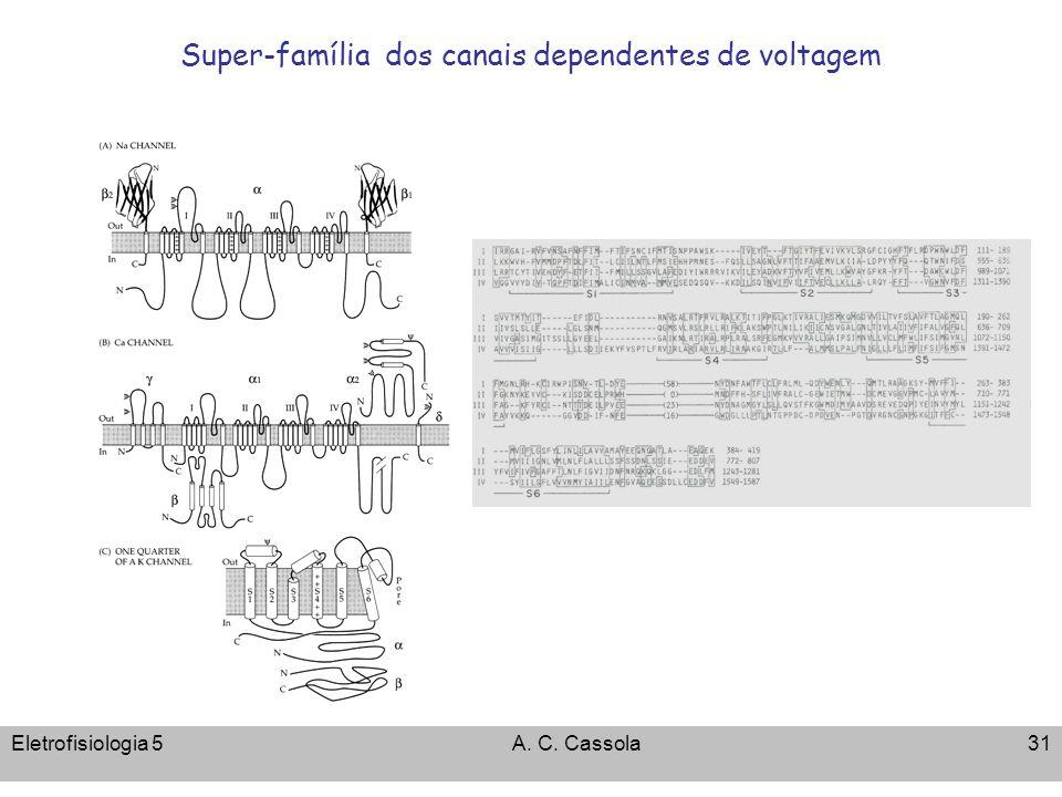 Super-família dos canais dependentes de voltagem