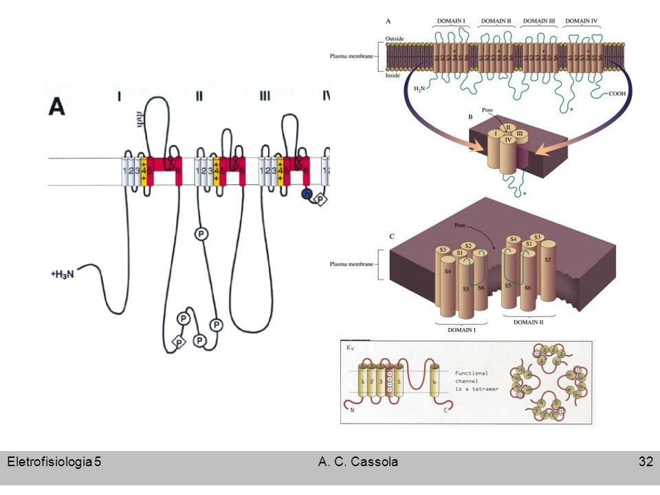Eletrofisiologia 5 A. C. Cassola