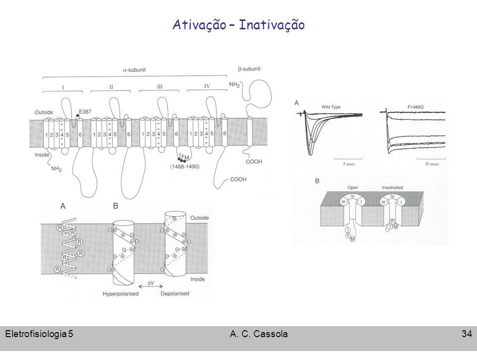 Ativação – Inativação Eletrofisiologia 5 A. C. Cassola
