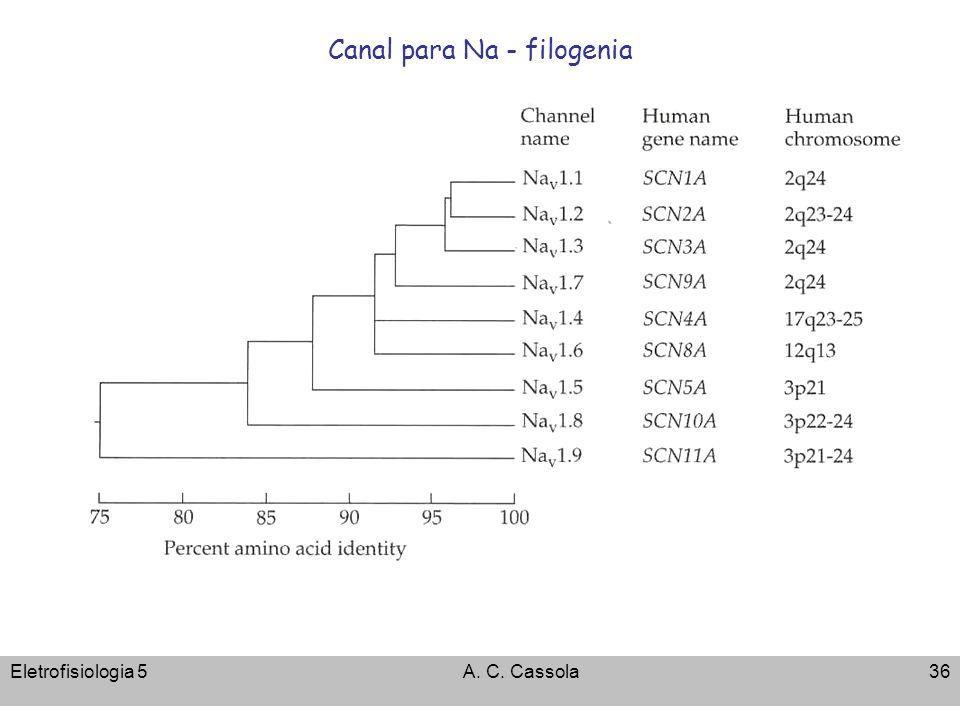 Canal para Na - filogenia