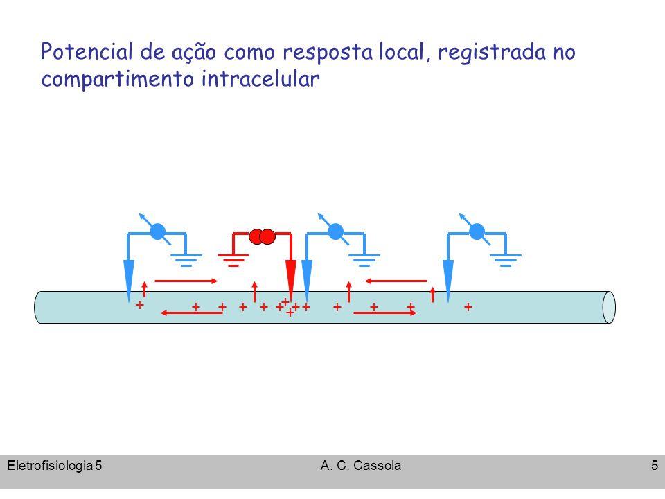 Potencial de ação como resposta local, registrada no compartimento intracelular