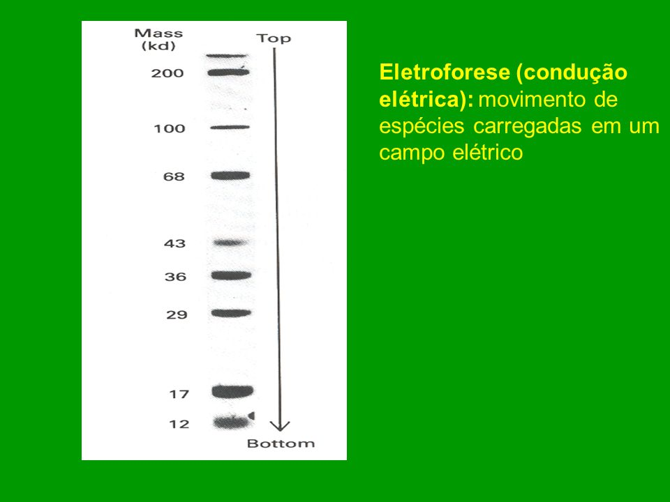 Eletroforese (condução elétrica): movimento de espécies carregadas em um campo elétrico