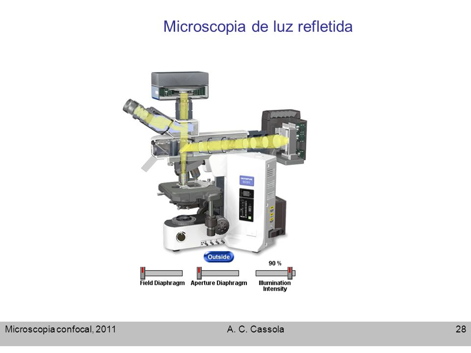 Microscopia de luz refletida