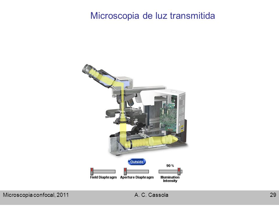 Microscopia de luz transmitida