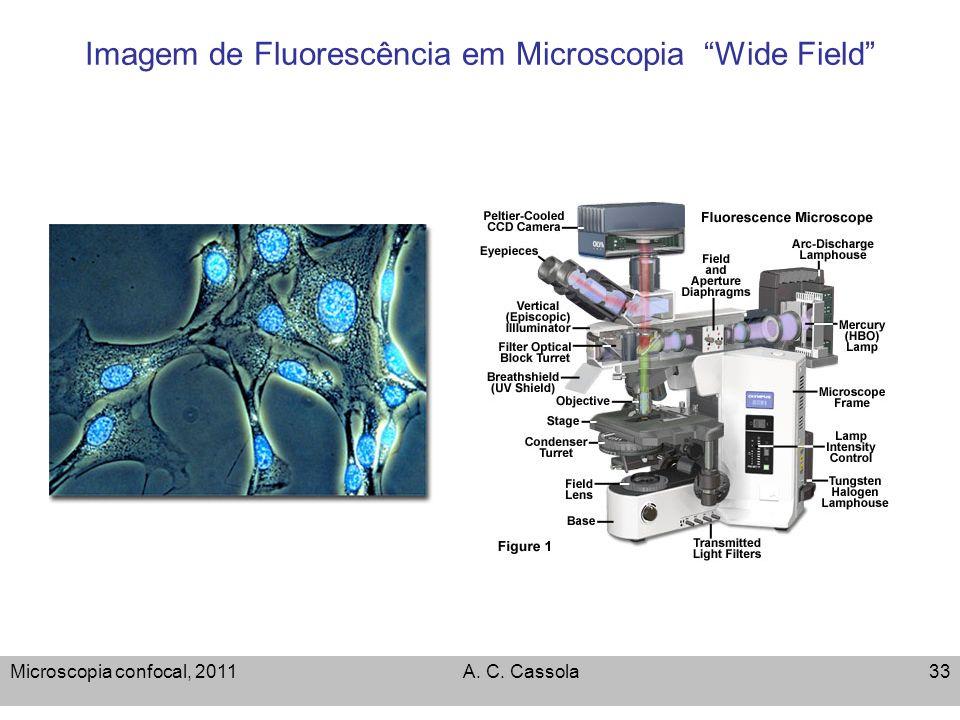 Imagem de Fluorescência em Microscopia Wide Field