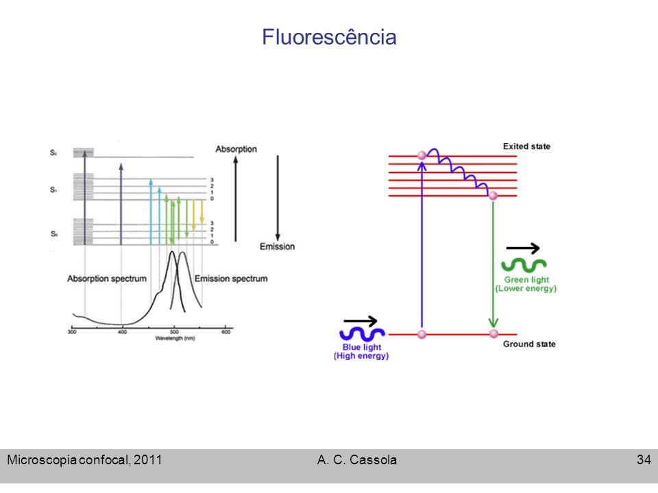 Fluorescência Microscopia confocal, 2011 A. C. Cassola