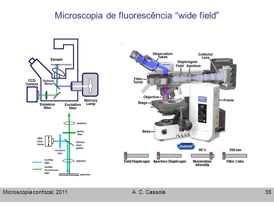 Microscopia de fluorescência wide field