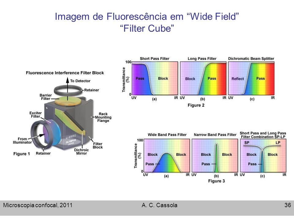 Imagem de Fluorescência em Wide Field Filter Cube