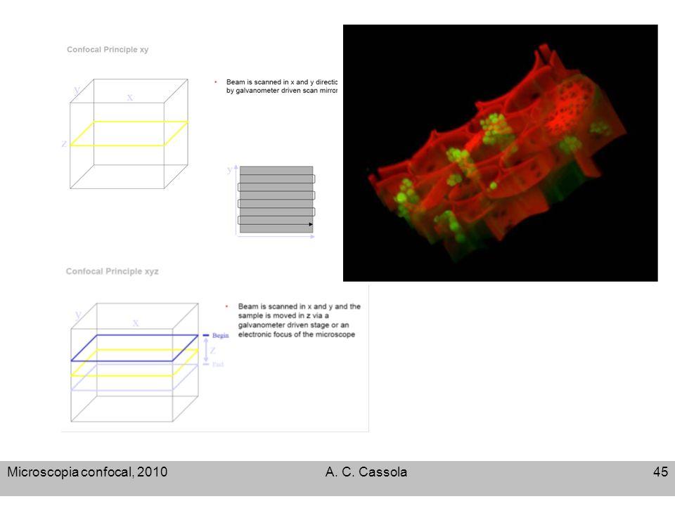 Microscopia confocal, 2010 A. C. Cassola