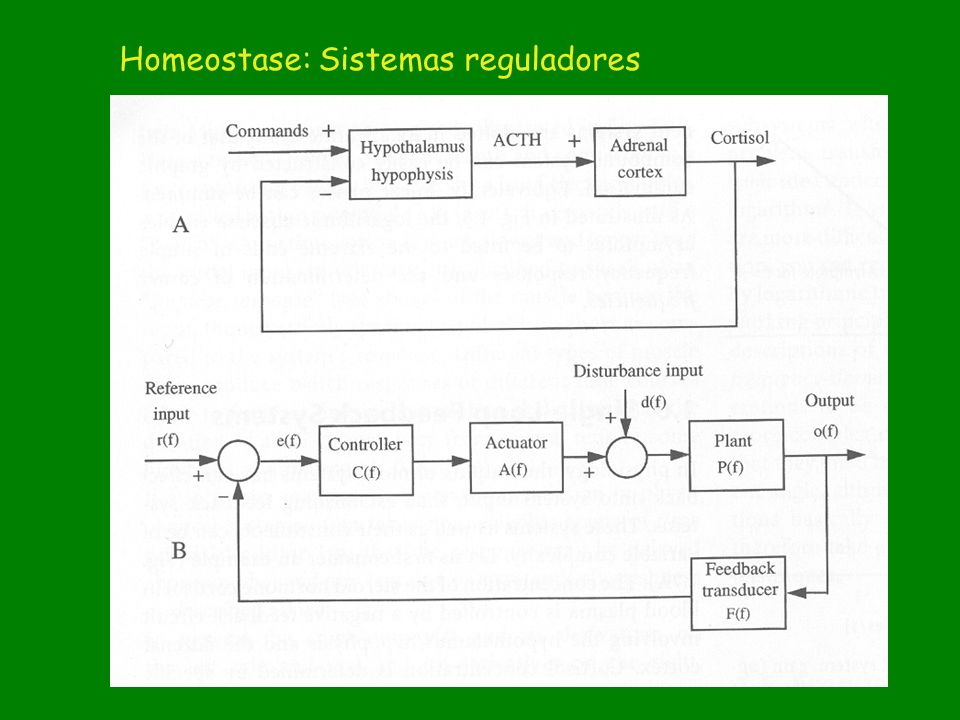 Homeostase: Sistemas reguladores