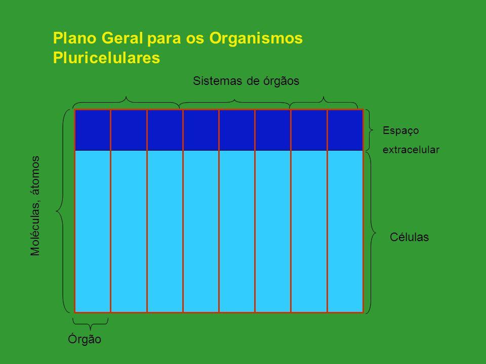 Plano Geral para os Organismos Pluricelulares