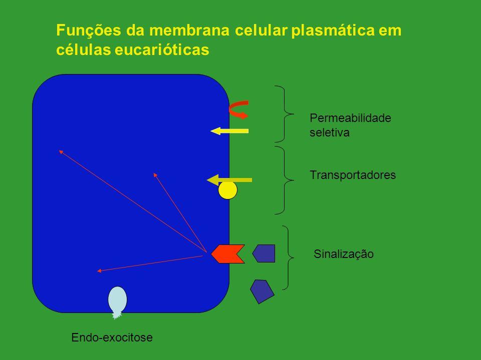 Funções da membrana celular plasmática em células eucarióticas