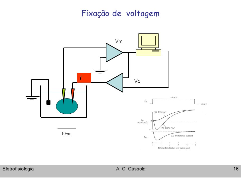 Fixação de voltagem Vm i Vc 10mm Eletrofisiologia A. C. Cassola