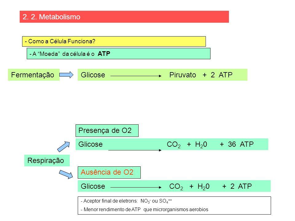 2. 2. Metabolismo Fermentação Glicose Piruvato + 2 ATP Presença de O2