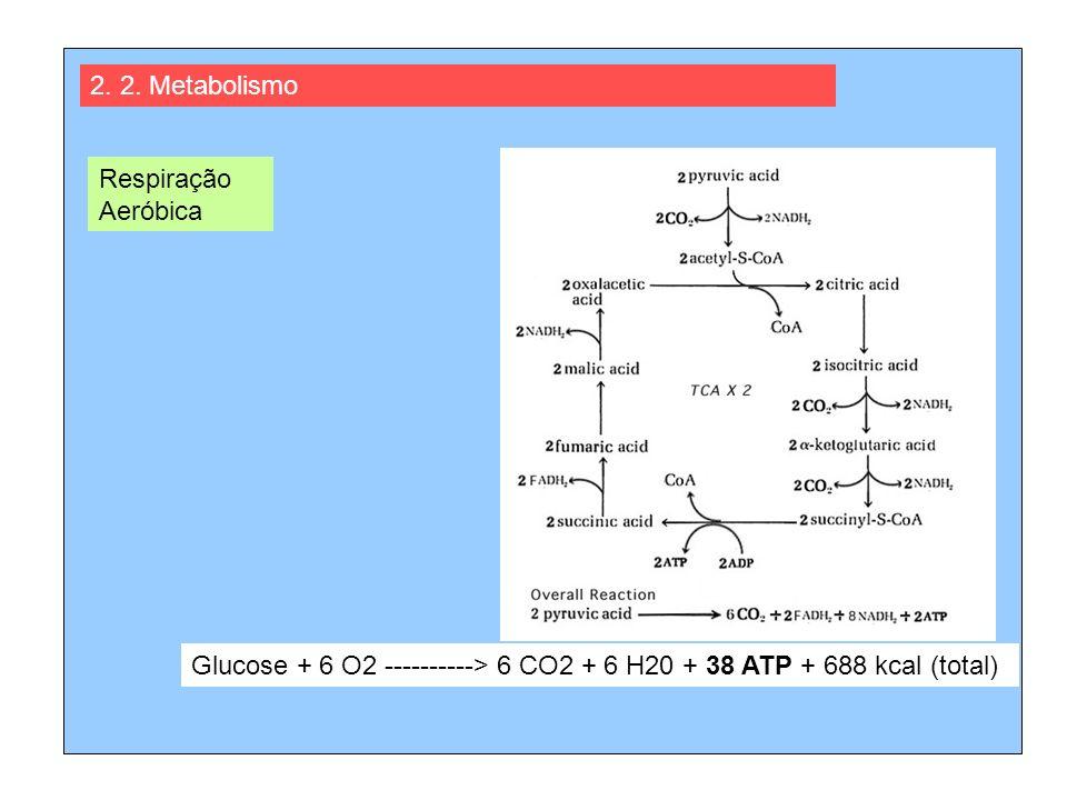 2. 2. Metabolismo Respiração Aeróbica.