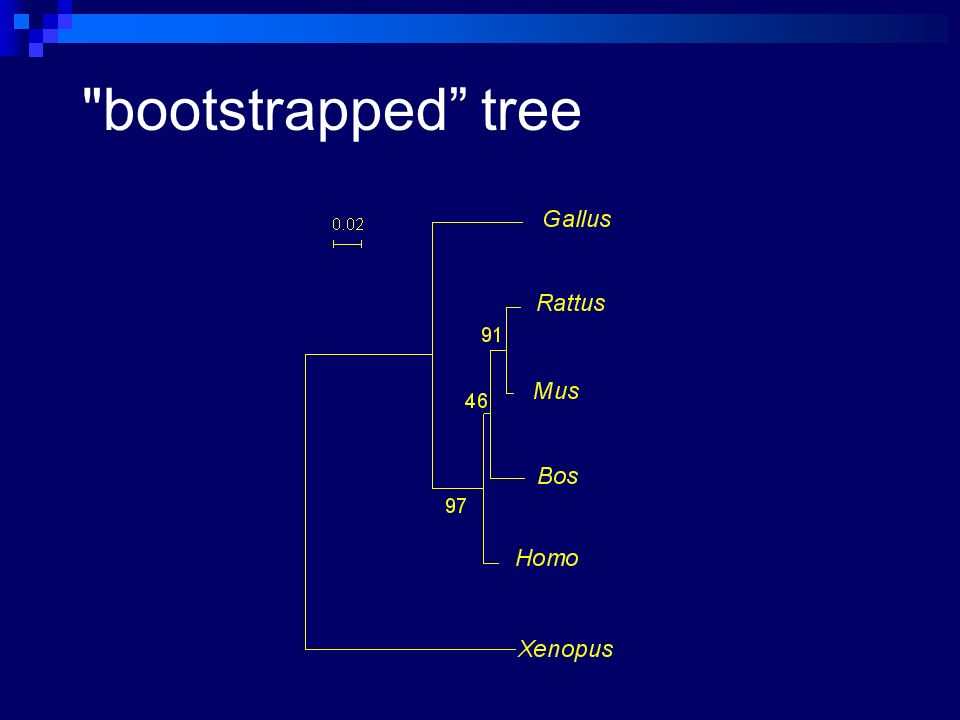 bootstrapped tree