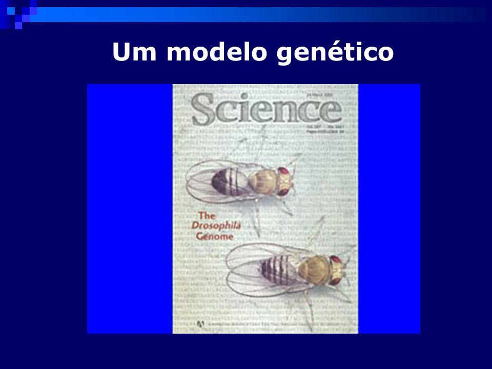 Um modelo genético