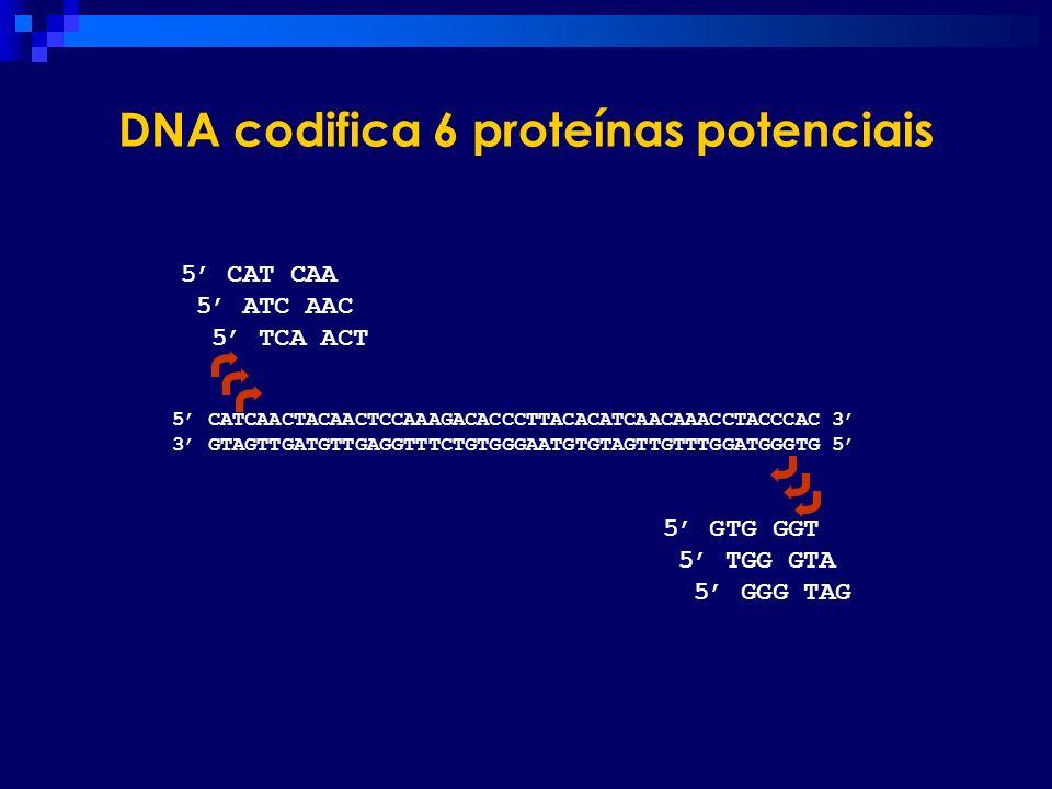 DNA codifica 6 proteínas potenciais