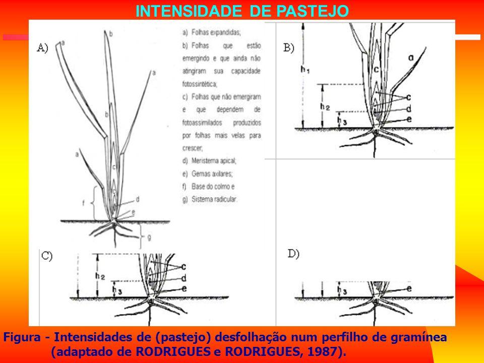 INTENSIDADE DE PASTEJO