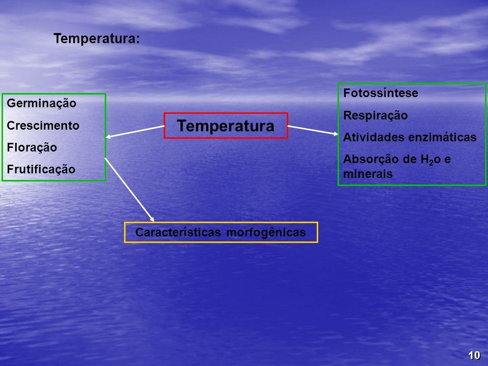 Características morfogênicas