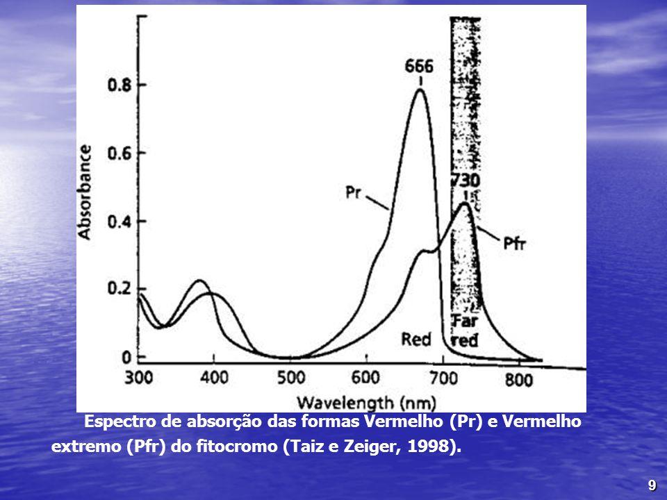 Espectro de absorção das formas Vermelho (Pr) e Vermelho extremo (Pfr) do fitocromo (Taiz e Zeiger, 1998).