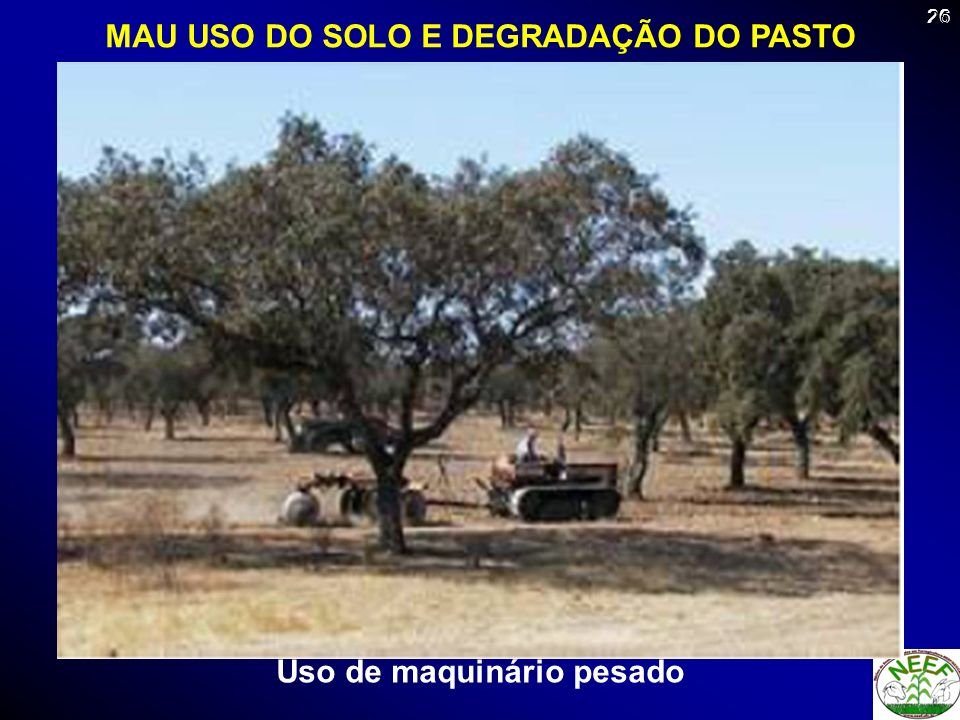 MAU USO DO SOLO E DEGRADAÇÃO DO PASTO Uso de maquinário pesado