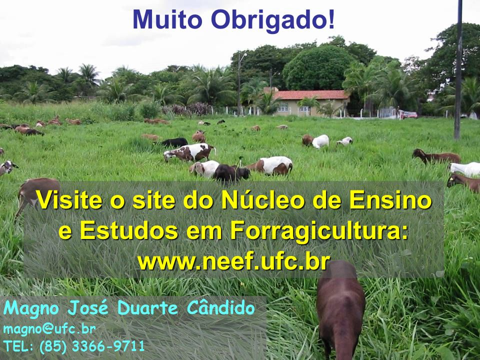 Muito Obrigado! 35. Visite o site do Núcleo de Ensino e Estudos em Forragicultura: www.neef.ufc.br.
