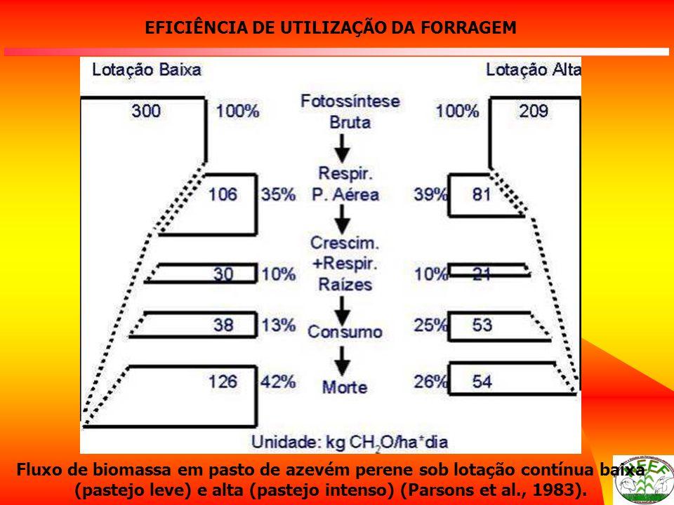 EFICIÊNCIA DE UTILIZAÇÃO DA FORRAGEM