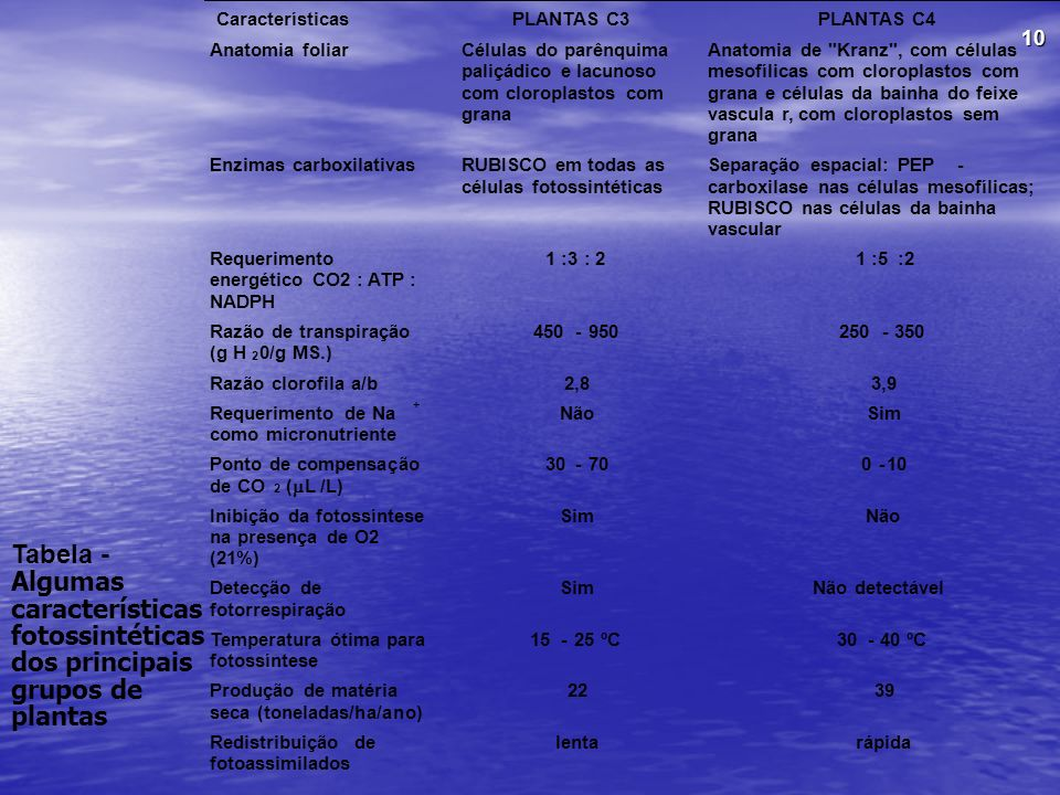 Características PLANTAS C3. PLANTAS C4. Anatomia foliar. Células do parênquima. paliçádico e lacunoso.